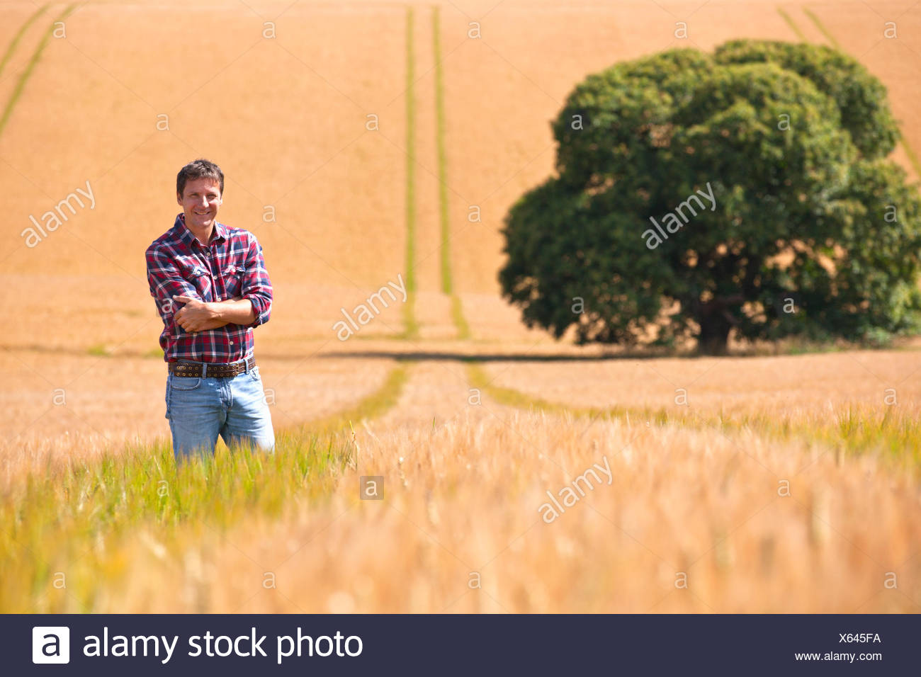 Portrait confident farmer standing in sunny rural barley crop field in summer - Stock Image