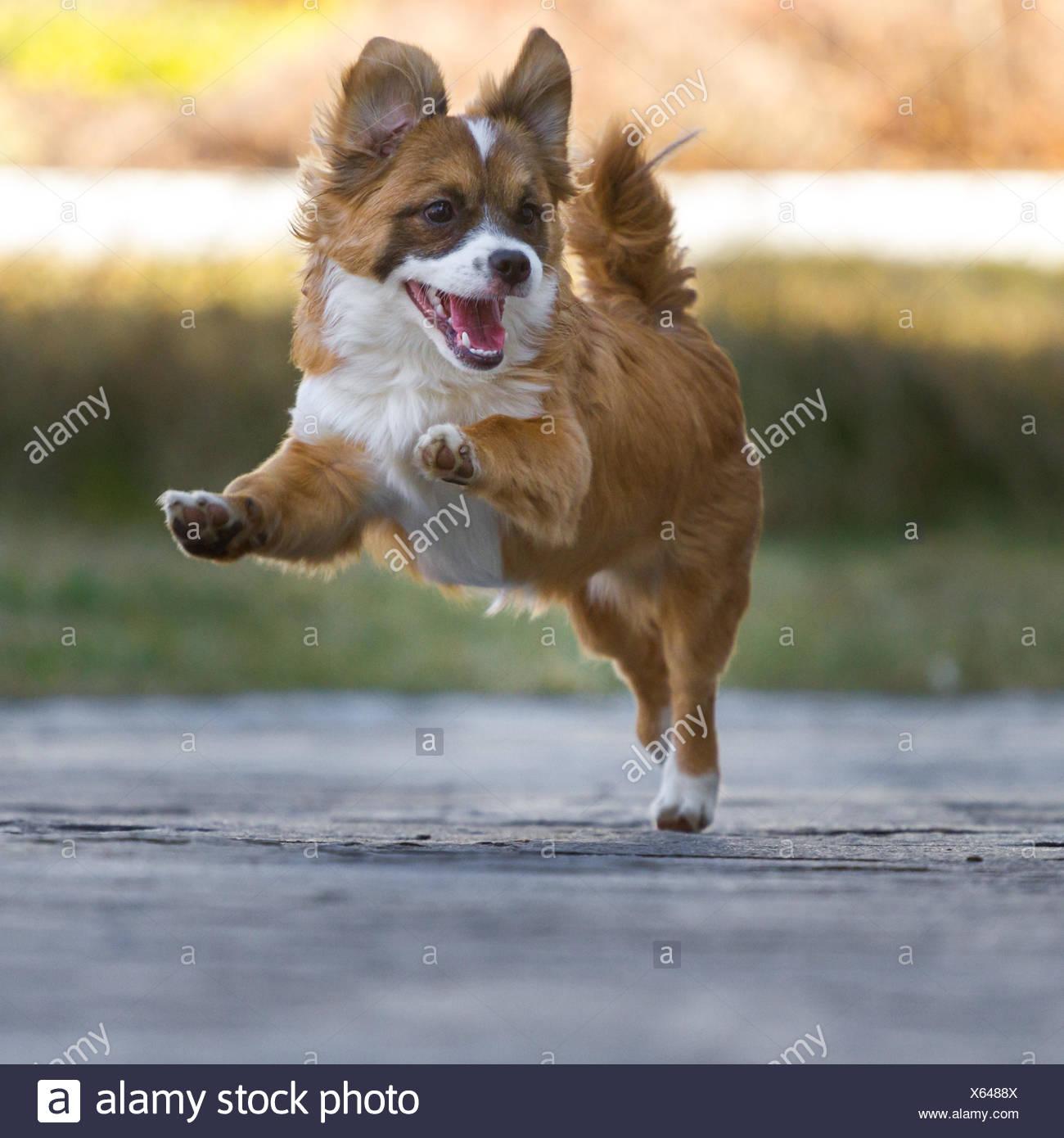 High-spirited Little Guy Stock Photo