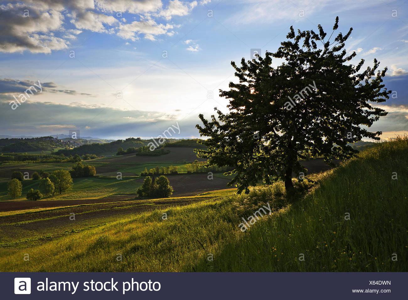 View from Montechiaro d'Asti, Piemont, Italy - Stock Image