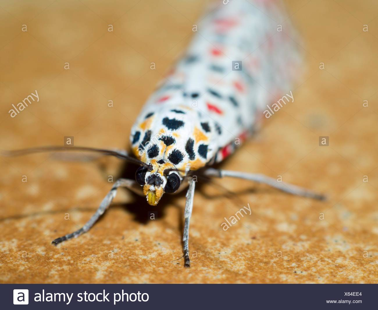 Colorful lepidopterans. Insect. Arthropoda. Macro Stock Photo