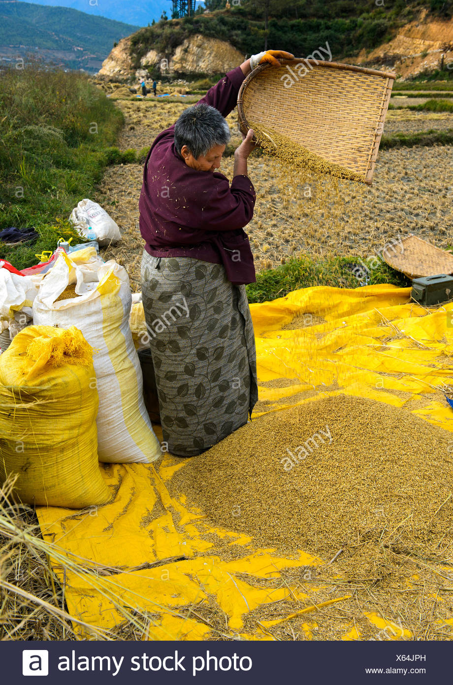 Bhutanese woman separating chaff from rice, Paro, Bhutan - Stock Image