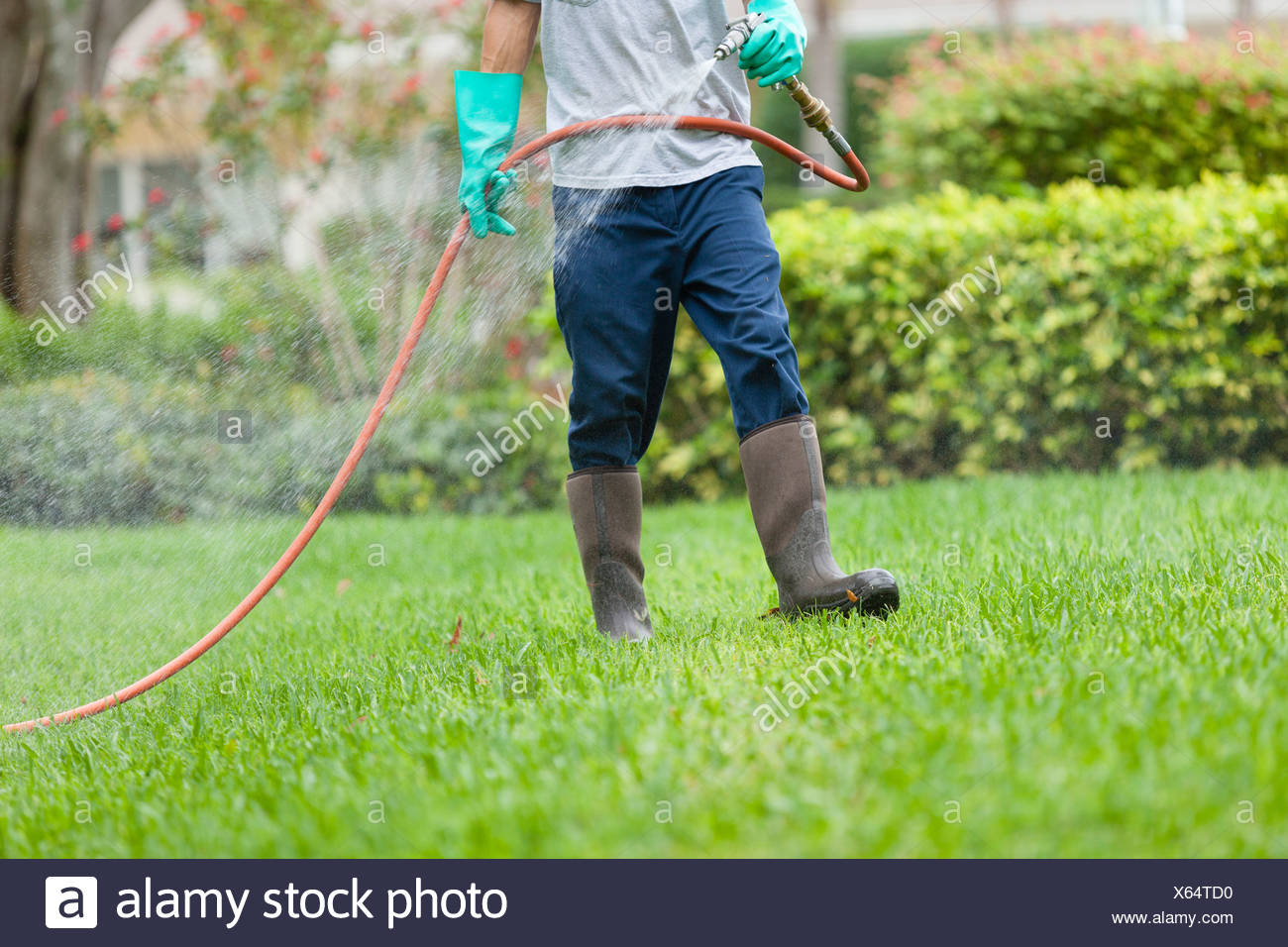 Pest control technician using high pressure spray gun and hose with heavy duty gloves - Stock Image