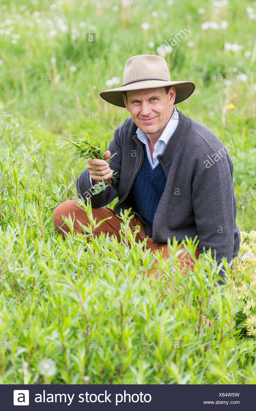 Farmer quality checking crops in field - Stock Image