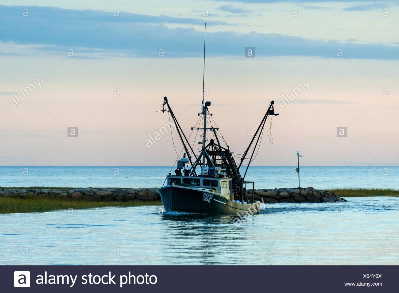Quahog stock photos quahog stock images alamy for Cod fishing ri