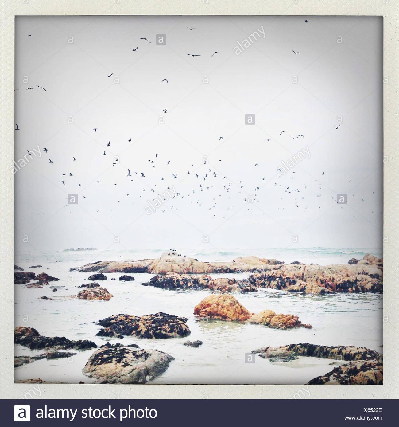 Flock of birds in sky over shoreline - Stock Image