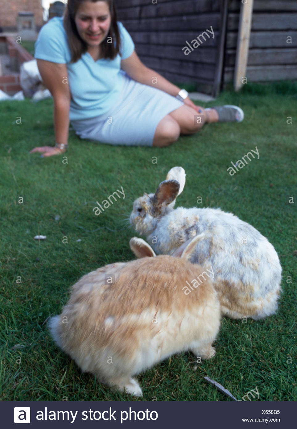 Two large pet rabbits on lawn with a young girl in the background         FOR EDITORIAL USE ONLY - Stock Image