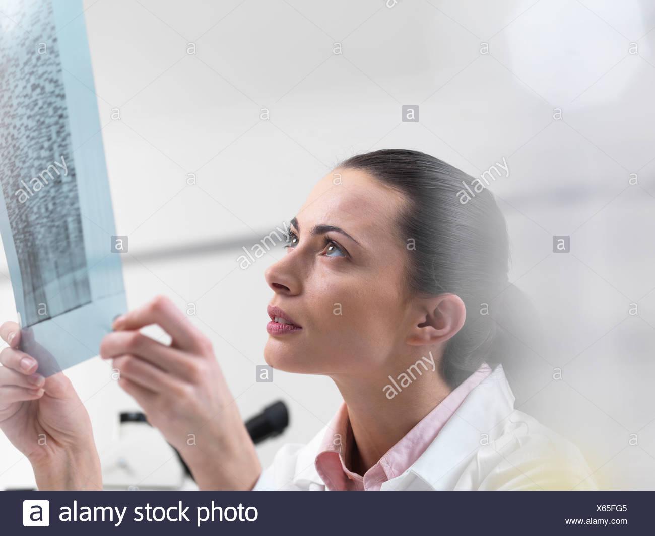 Scientist examining DNA sequencing gel - Stock Image