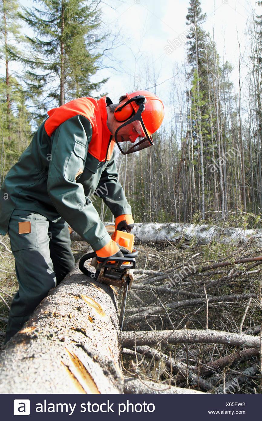 Man sawing tree - Stock Image