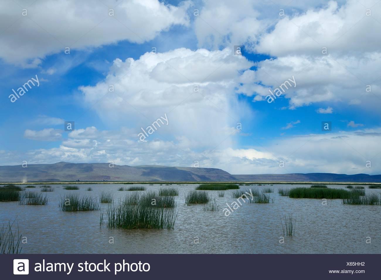 Wetland along Tour Route, Summer Lake Wildlife Area, Oregon Outback Scenic Byway, Oregon. - Stock Image
