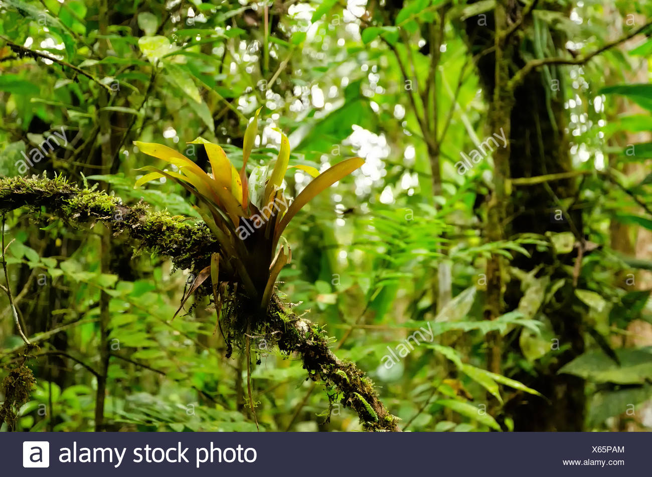 jungle - Stock Image