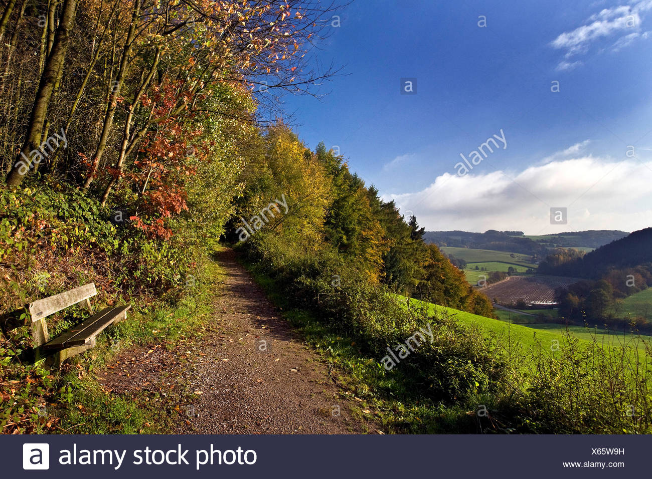autumn landscape of the Elfringhauser Schweiz, Germany, North Rhine-Westphalia - Stock Image