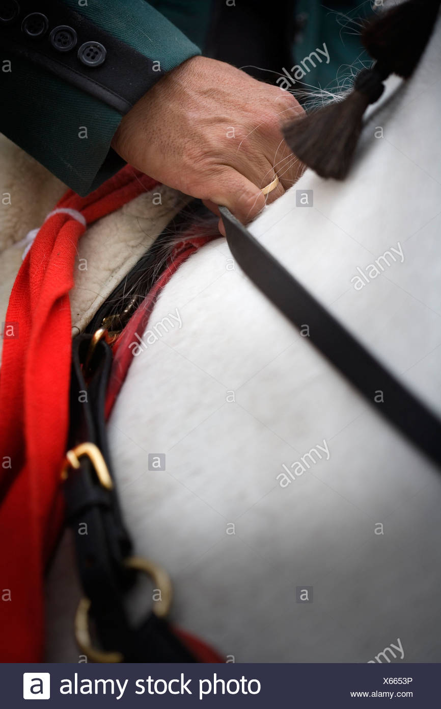 Rider hand the reins of a horse - Stock Image