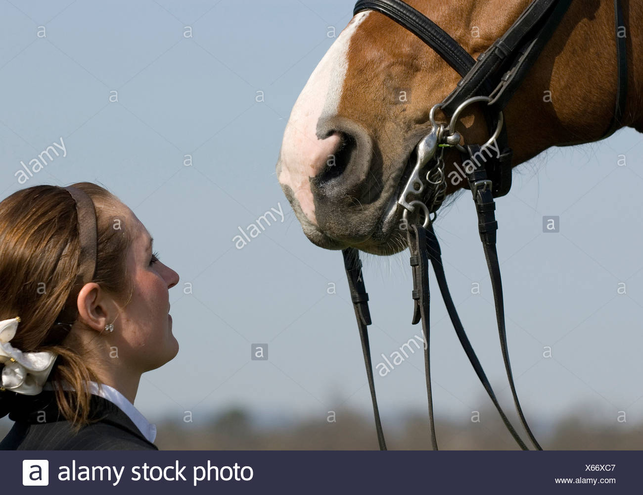 Horse Mouth Bits Stock Photos & Horse Mouth Bits Stock Images - Alamy