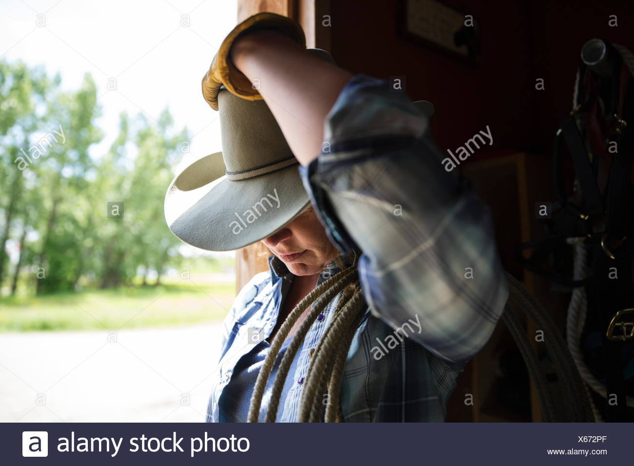 bab7de8762c09 Cowboy Looking Down Stock Photos   Cowboy Looking Down Stock Images ...