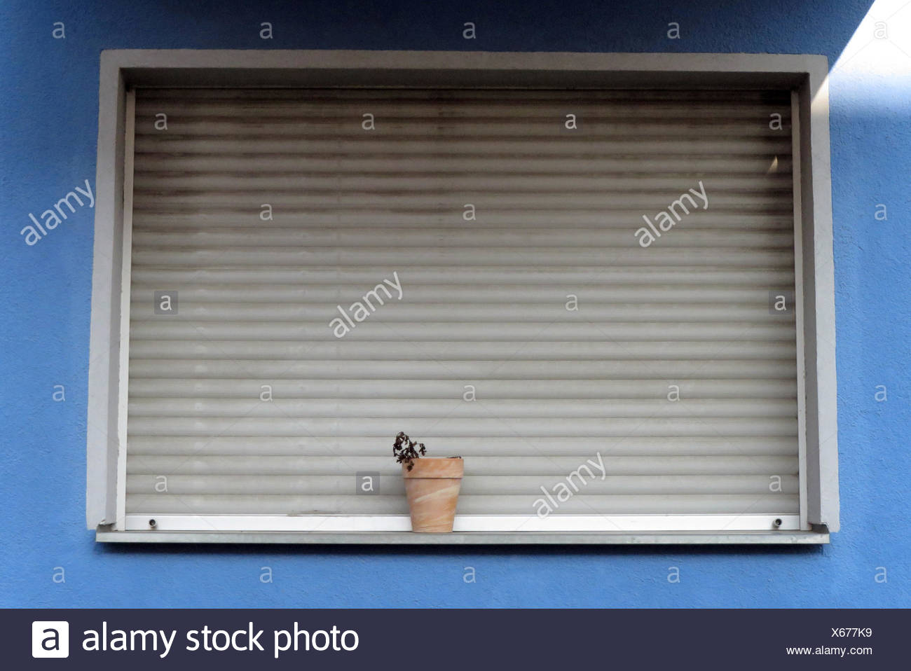 Berlin, Germany, Flower pot with withered flower in front of a lowered blind - Stock Image