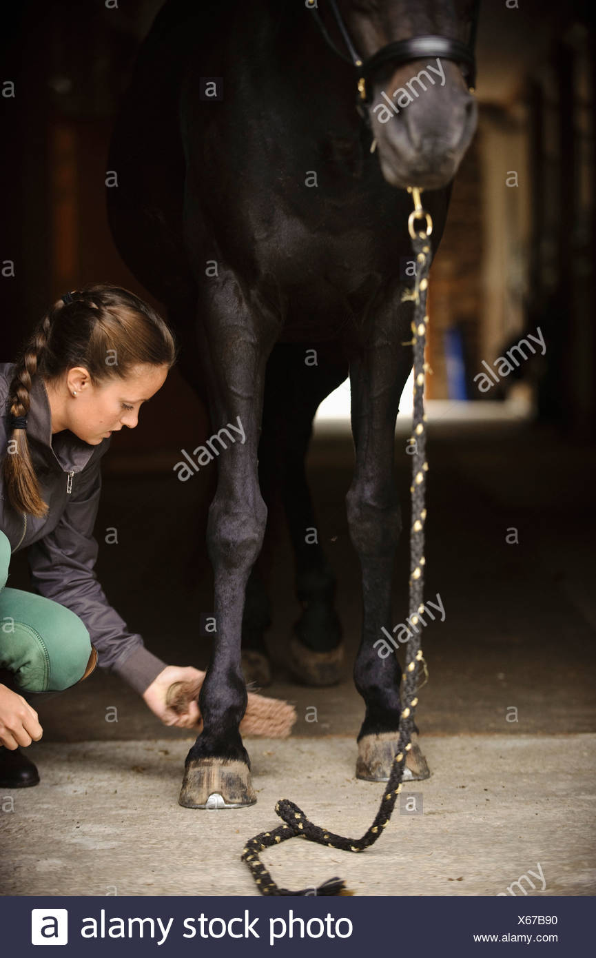 Woman and horse in the stable - Stock Image