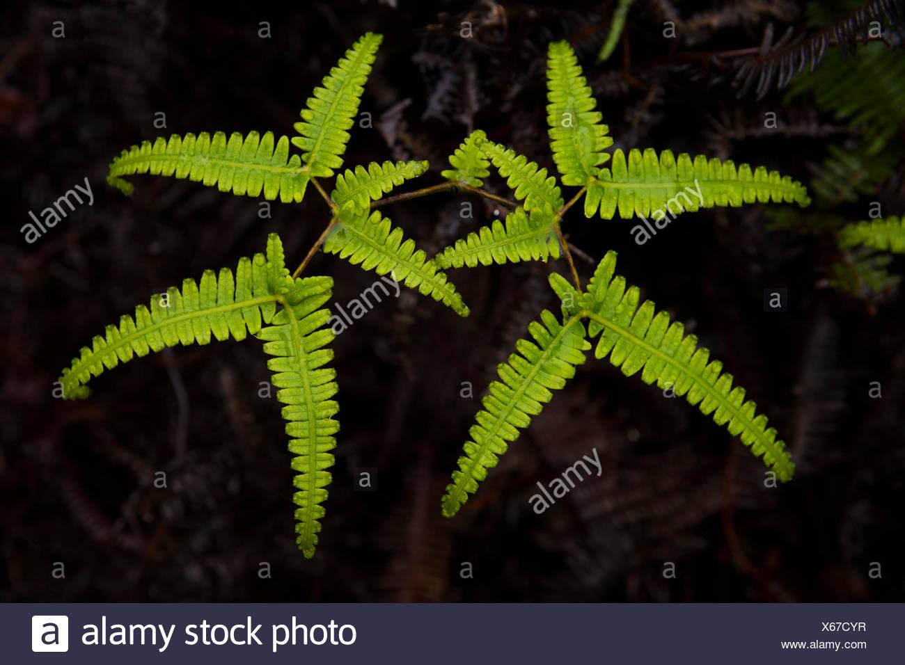 Kauai,plants,Well Pali Kona,reserve,USA,Hawaii,America,nature, - Stock Image