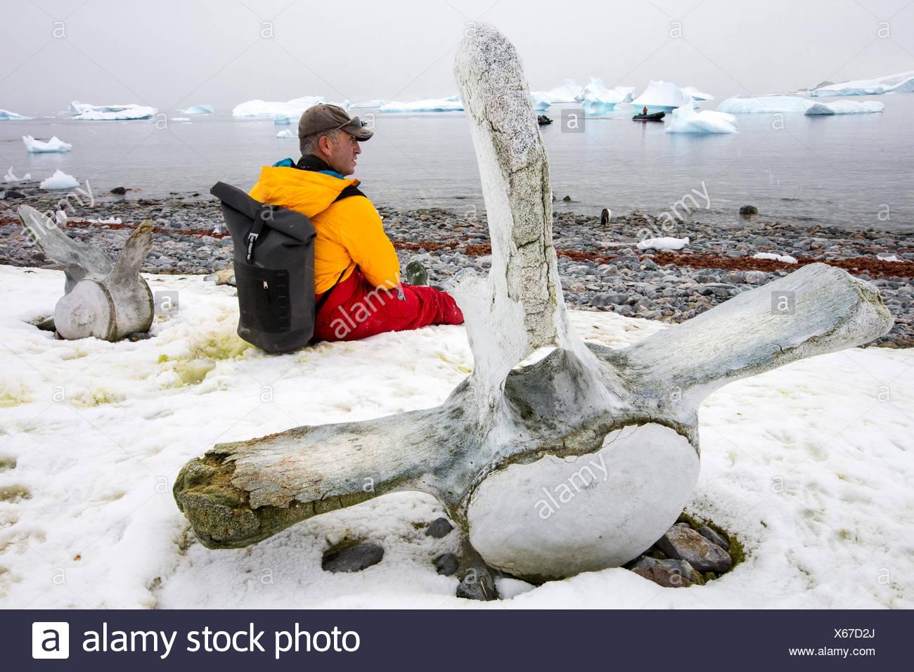 Man sitting near whale vertebrae, Curverville Island, Antarctica - Stock Image