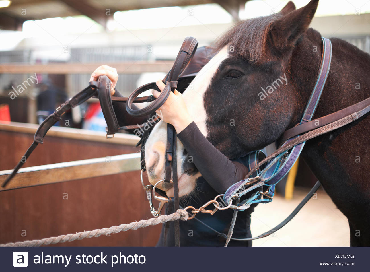 Young woman putting bridle on horse Stock Photo