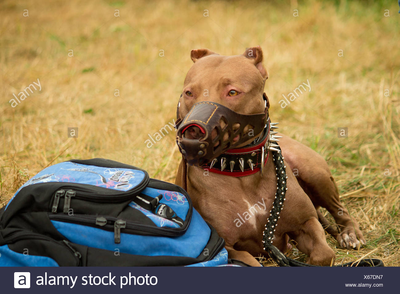 Large pedigreed dog guarding the things of the own - Stock Image