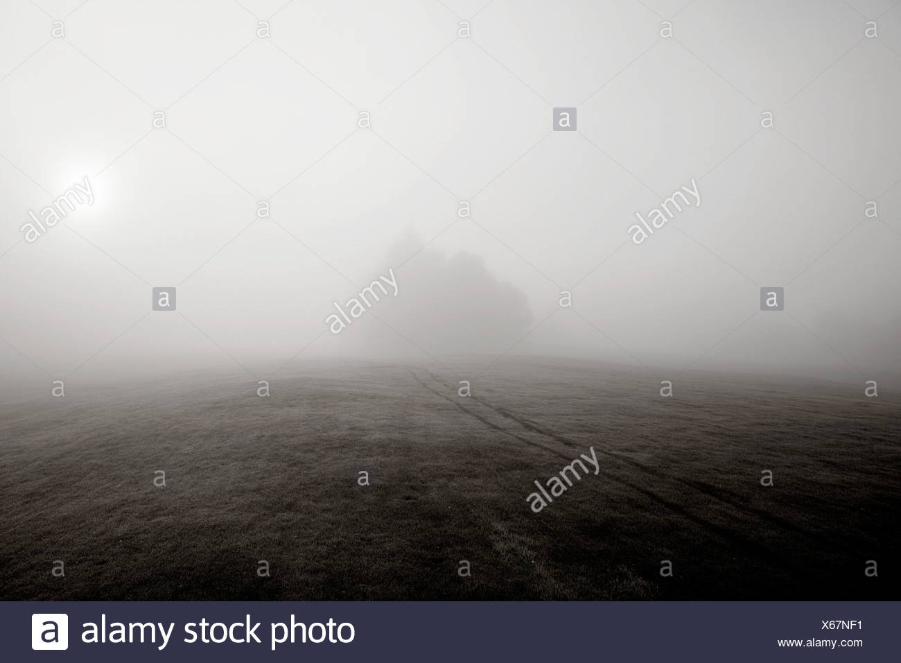 Fog over hill and distant trees - Stock Image