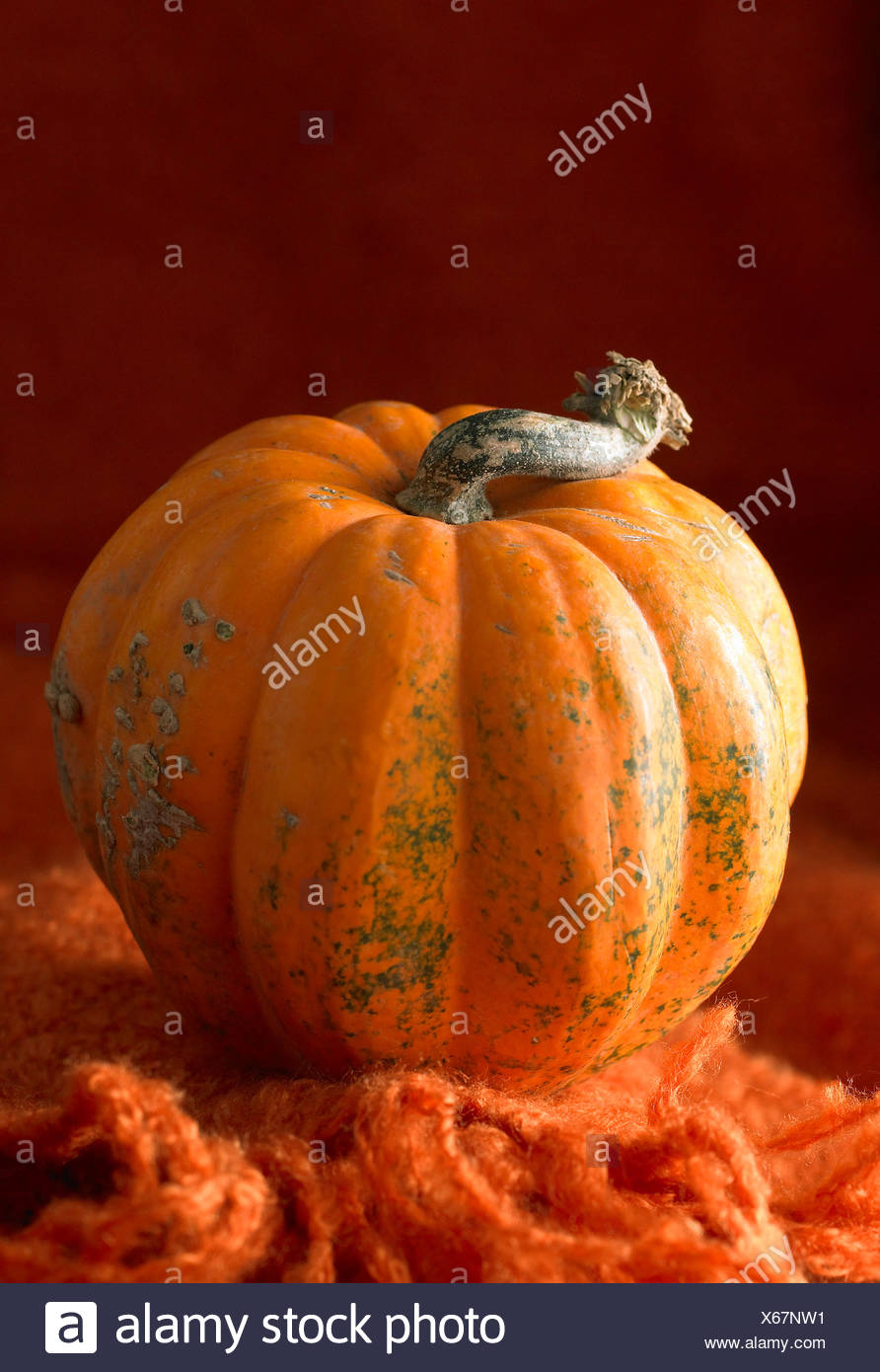 Whole pumpkin - Stock Image