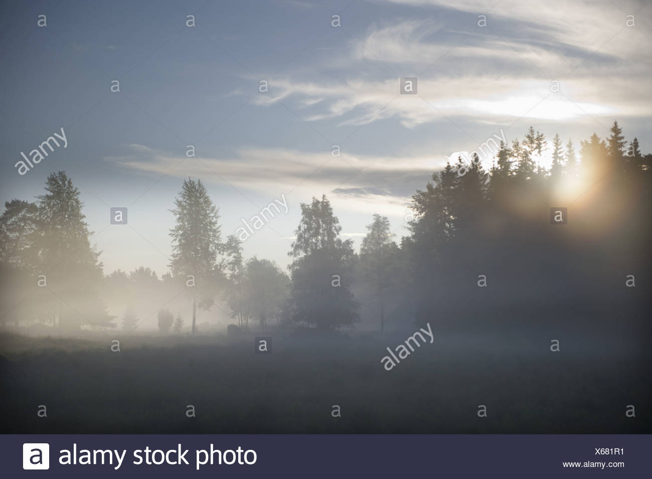 View over misty field - Stock Image