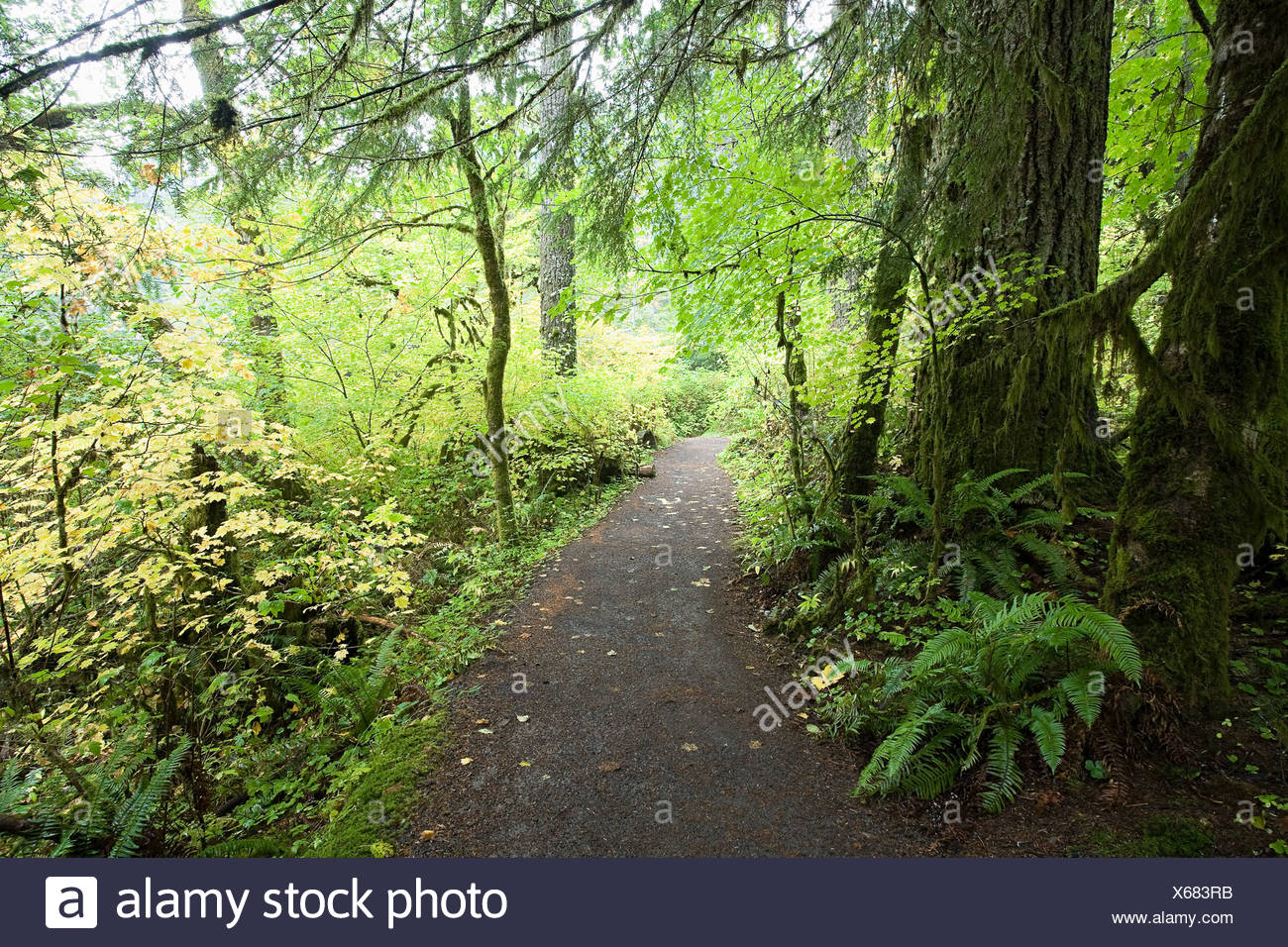 Path through silver falls state park - Stock Image