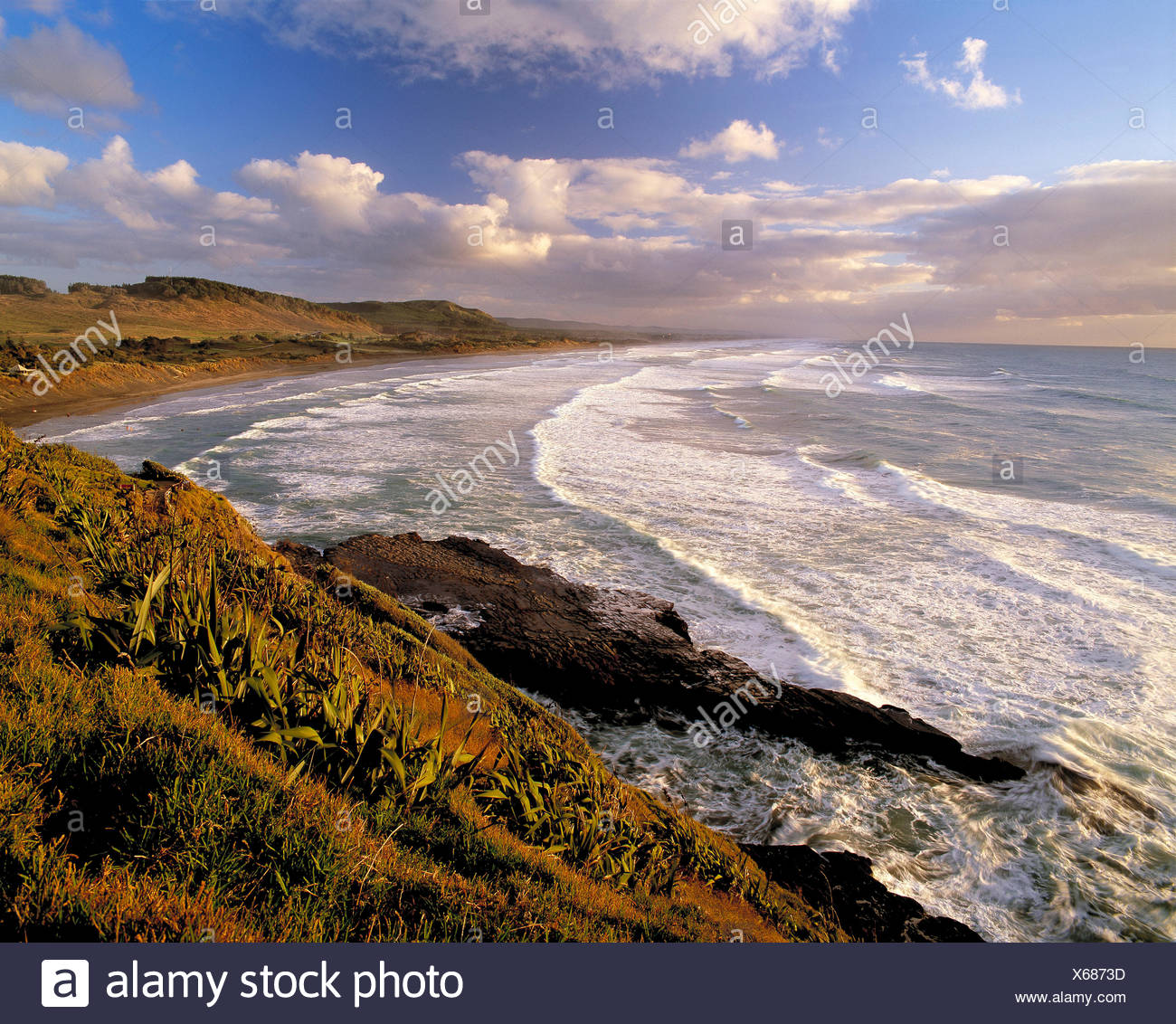New Zealand. North Island. Auckland Region. Muriwai Beach. - Stock Image