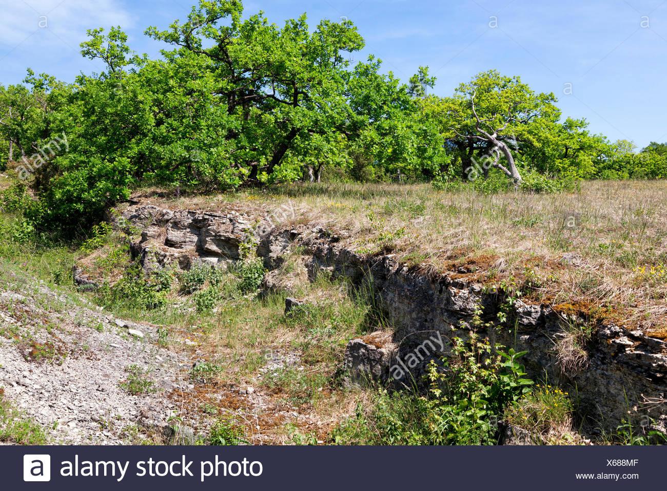 dry meadow and oak grove, arid environment, Germany, Bavaria, NSG Maeusberg - Stock Image