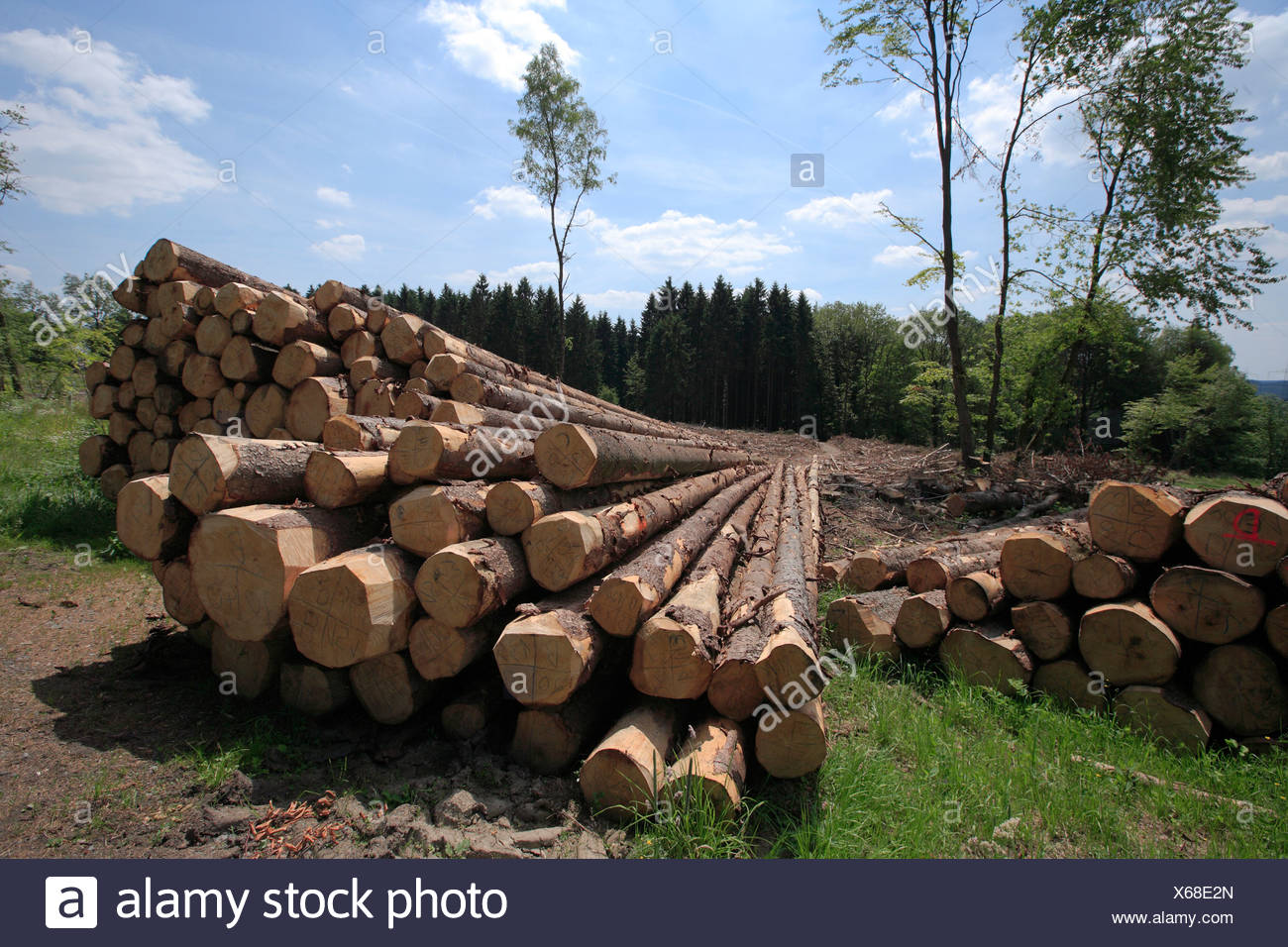 Timber harvesting, timber, spruces lying on the road, cleared area behind, Wipperfuerth, North Rhine-Westphalia, Germany, Europe - Stock Image