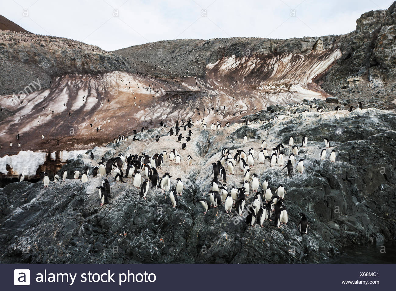 Melting snow runs down the Madder Cliffs on Joinville Island which play host to a large Adelie Penguin colony,  Joinville Island, Antarctic Peninsula - Stock Image