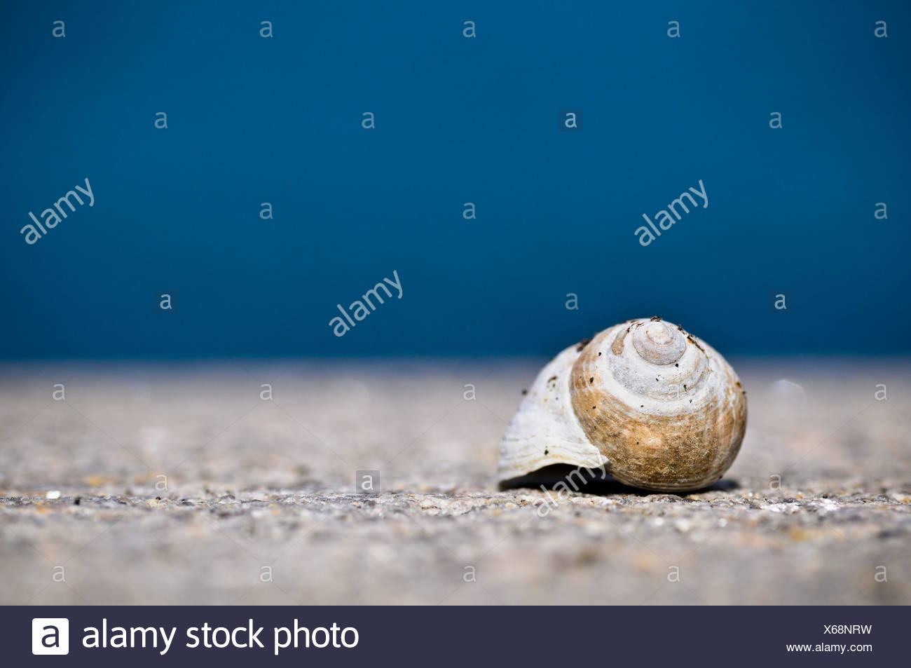 Snail - Stock Image