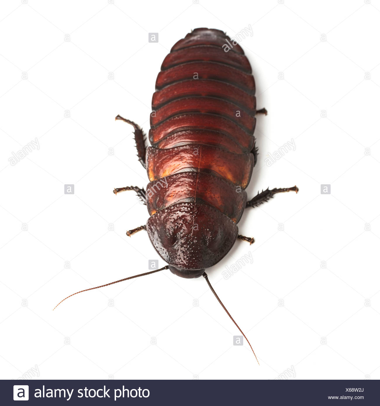 Cockroach Stock Photos & Cockroach Stock Images - Alamy