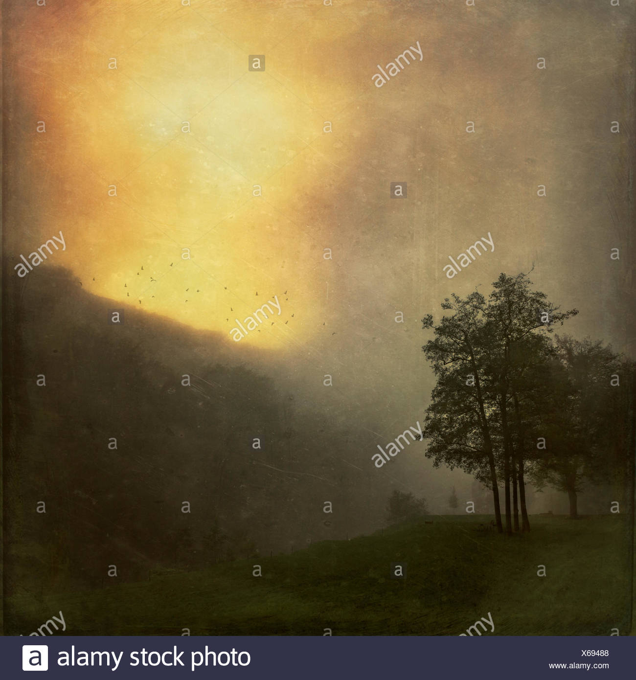 Landscape at sunrise in the fog, textured effect - Stock Image