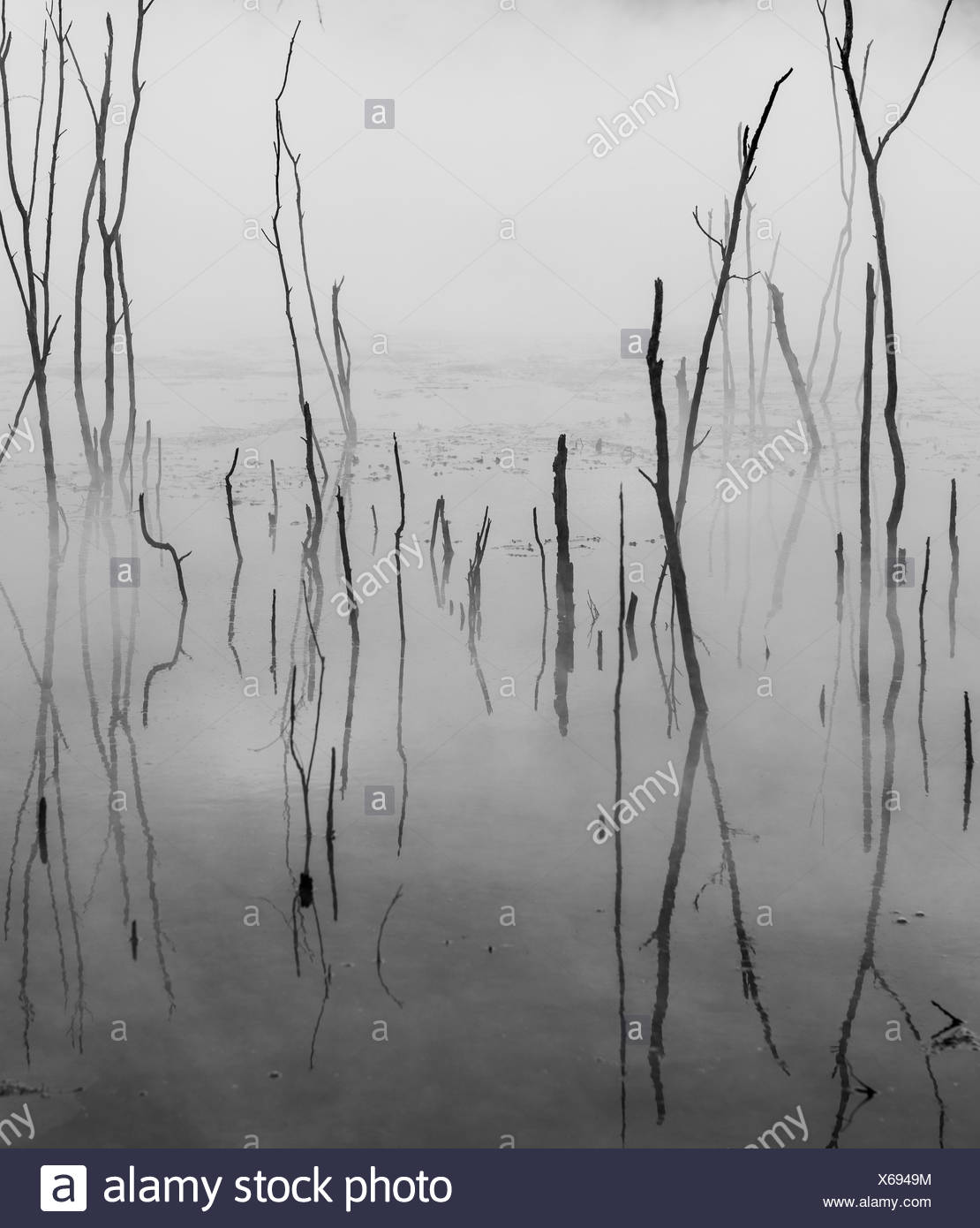 Dead branches reflected on steaming water, hot spring, Kuirau Park, Rotorua, New Zealand - Stock Image