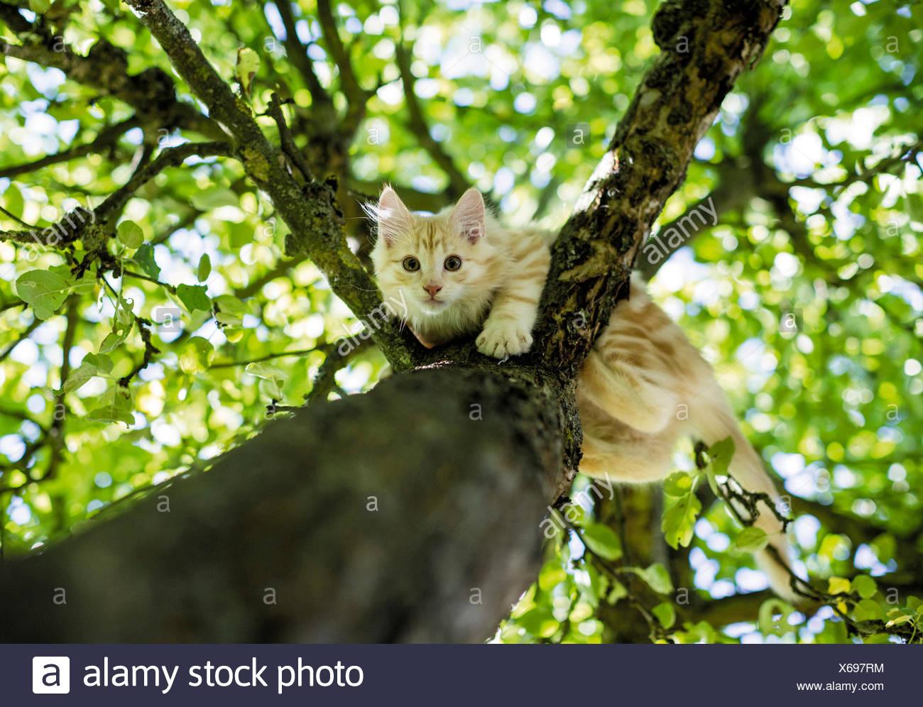 Climbing Tree Stock Ph...