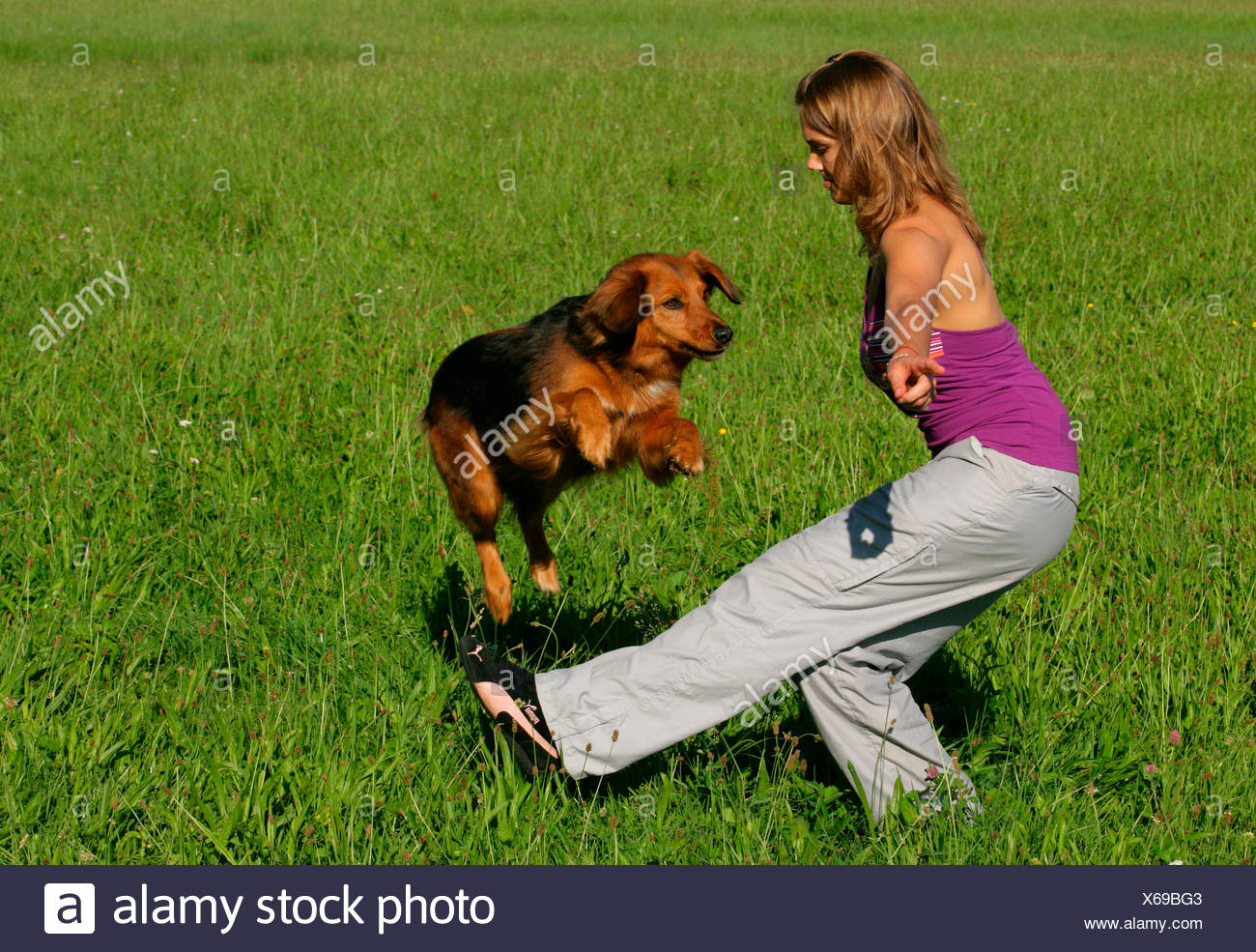 Mixed-breed dog leaping over the leg its owner - Stock Image