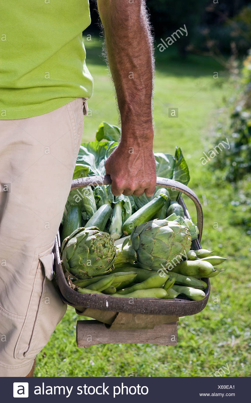 Close up of man holding vegetable basket - Stock Image