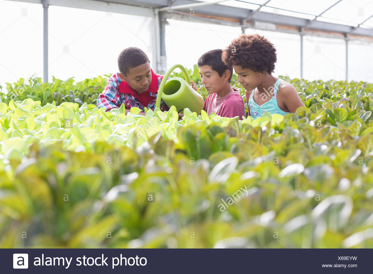 Three children watering plants in greenhouse - Stock Image