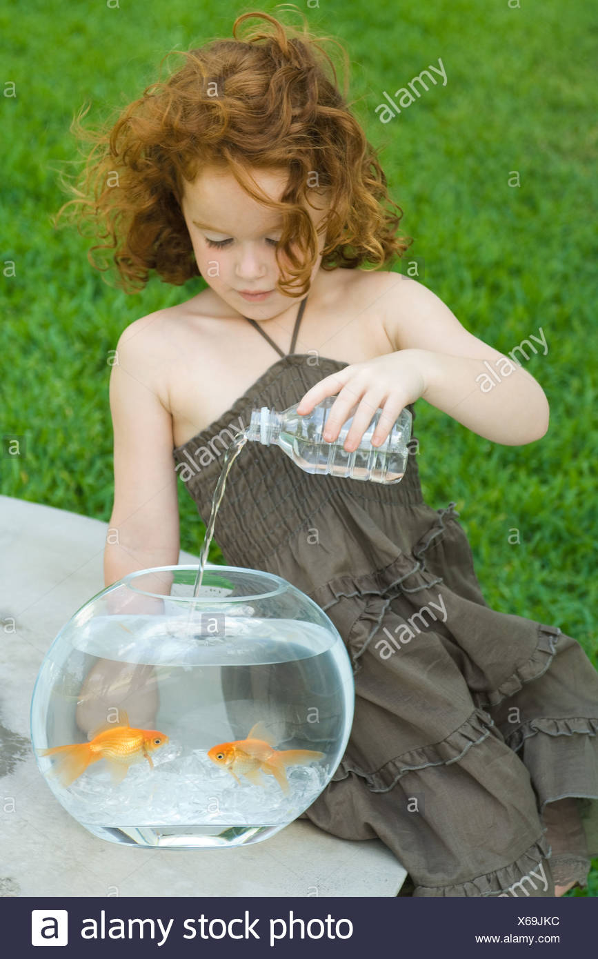 Redheaded little girl pouring bottled water into goldfish bowl - Stock Image