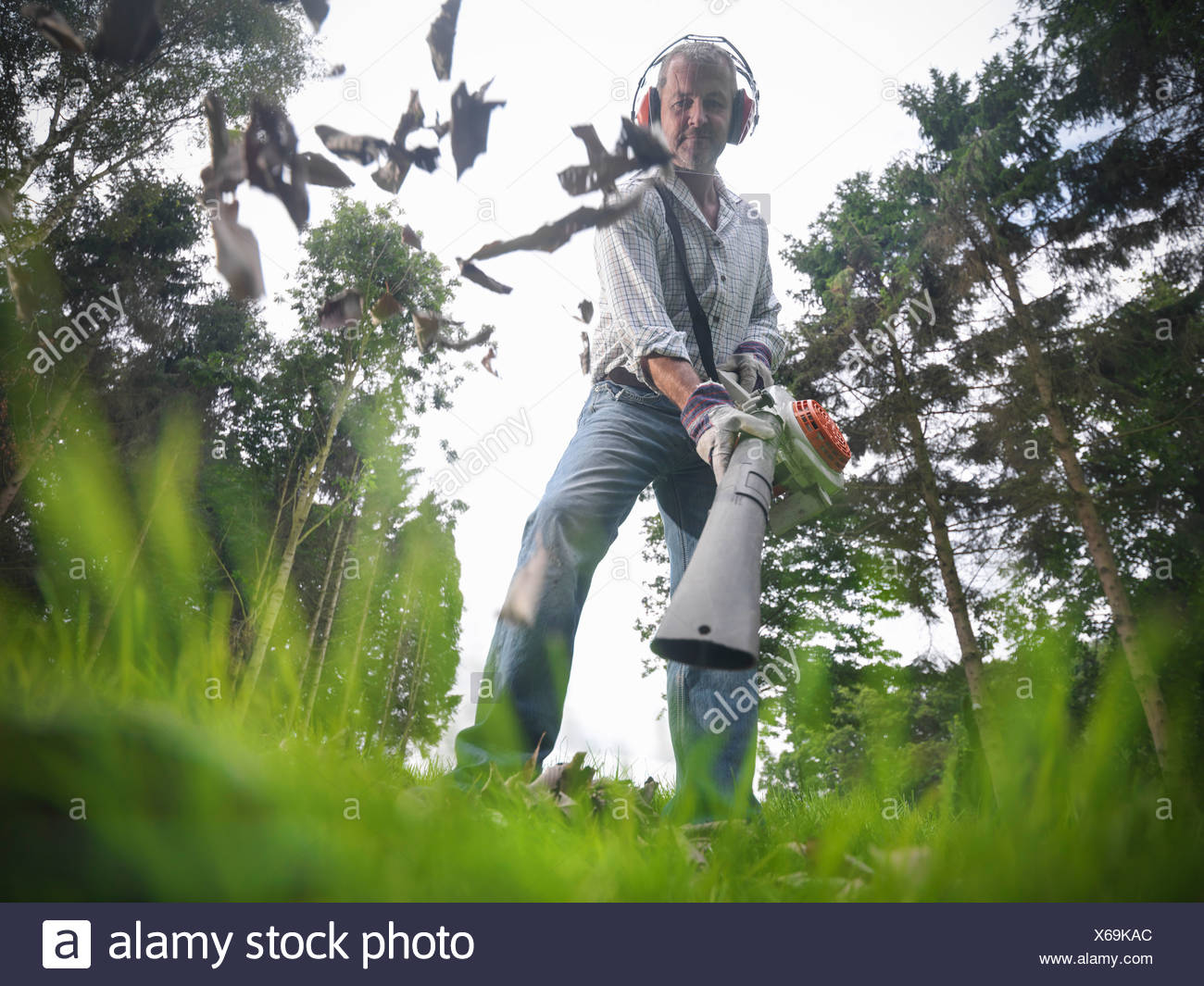 Man blowing leaves on grassy lawn - Stock Image