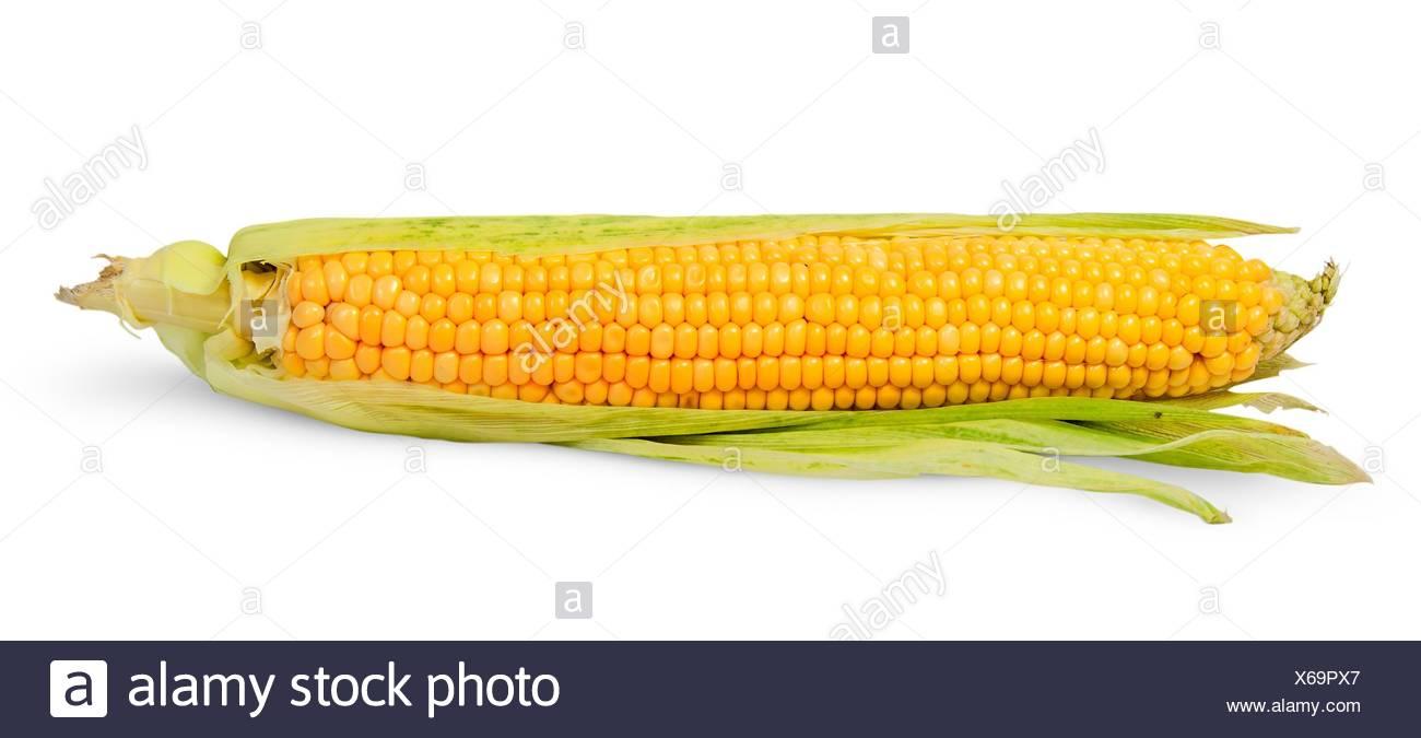 Single half peeled ear of corn isolated on white background. Stock Photo