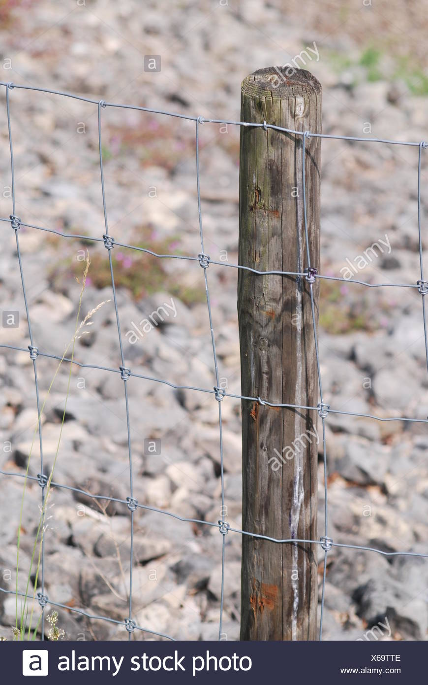 fence metal wire wire netting enclosed post locked closed ausgegrenzt - Stock Image