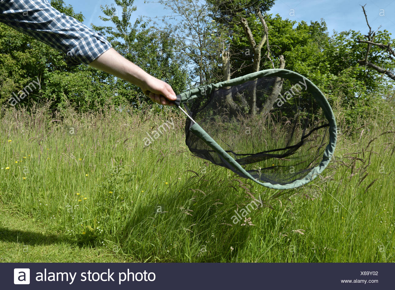 Using a butterfly net - Stock Image