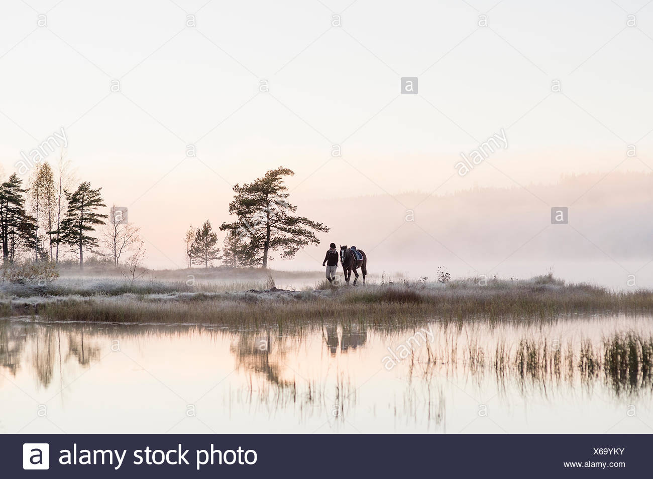 Sweden, Vastmanland, Bergslagen, Hallefors, Grythyttan, Bovik, Young woman walking with horse along lake shore - Stock Image