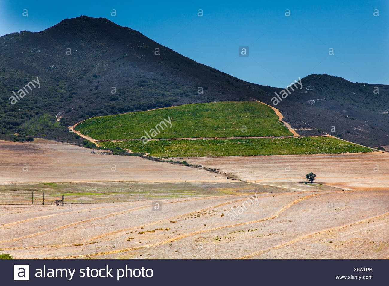 Landscape at Darling South Africa - Stock Image