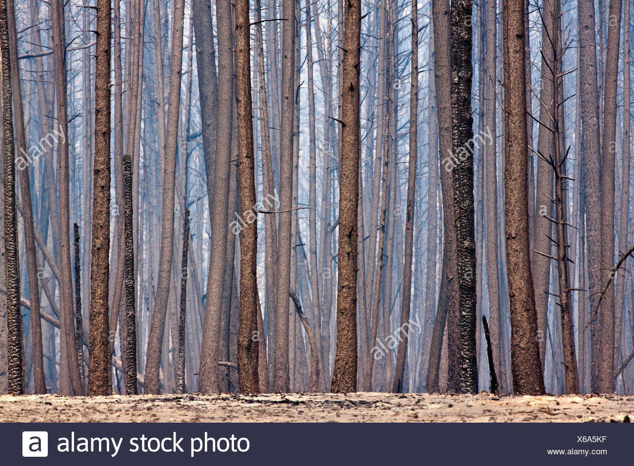 Forest Fire imagery in the Chilcotin region of British Columbia, Canada. - Stock Image