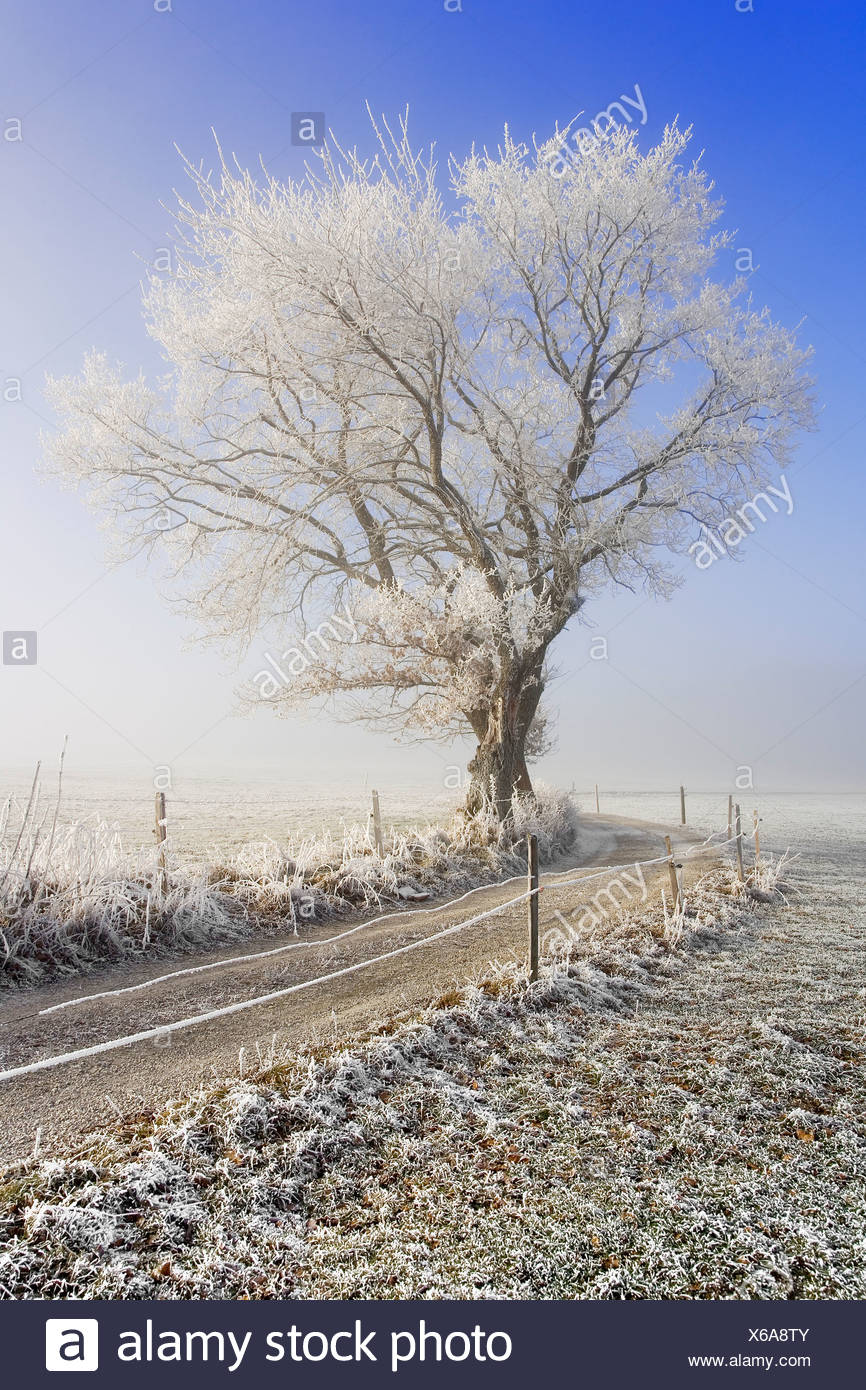 Field path in a winterly landscape with hoarfrost and fog, Fribourg, Switzerland Stock Photo