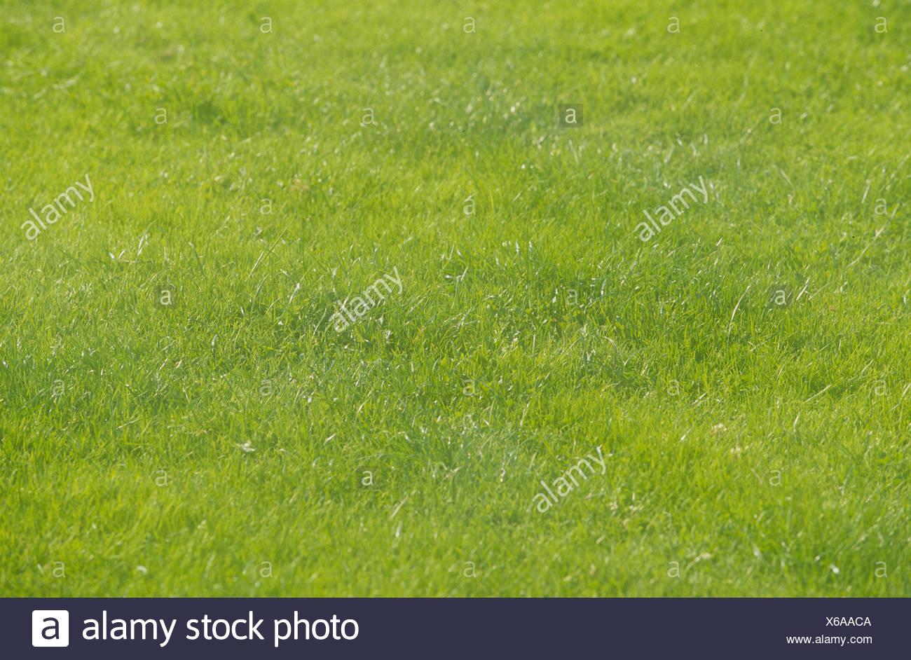 Lawn / Rasen / Wiese Stock Photo